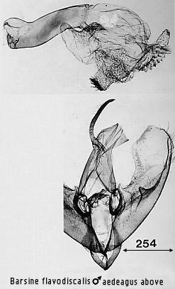 ::The Moths of Borneo::